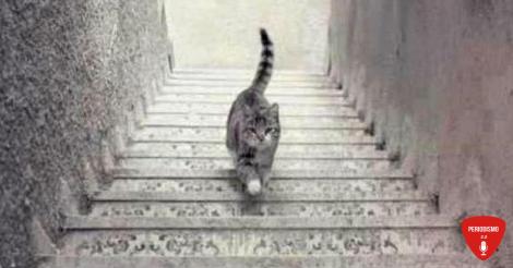 ¿Sube o baja?